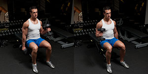 Seated Alternating Dumbbell Hammer Curl